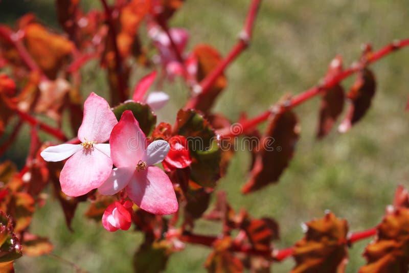 Flores bonitas em uma árvore foto de stock