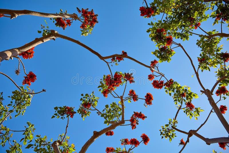 Flores bonitas na árvore tropical imagem de stock