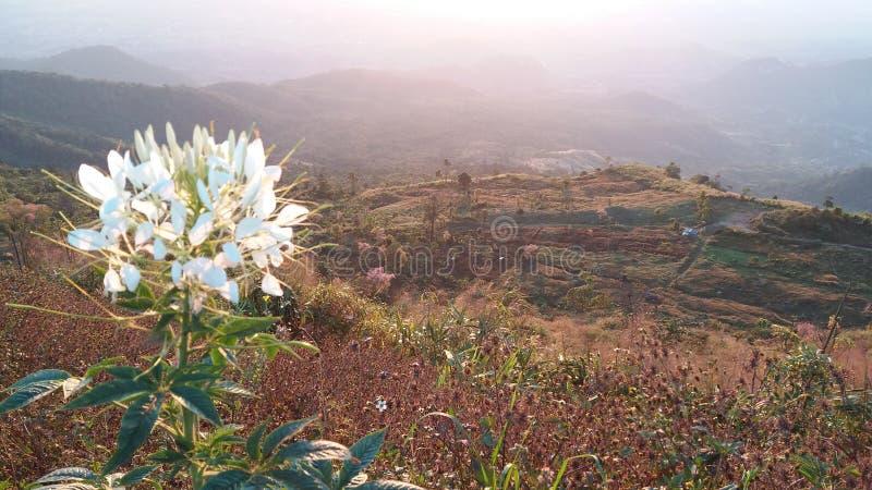 Flores bonitas na montanha na manhã imagem de stock