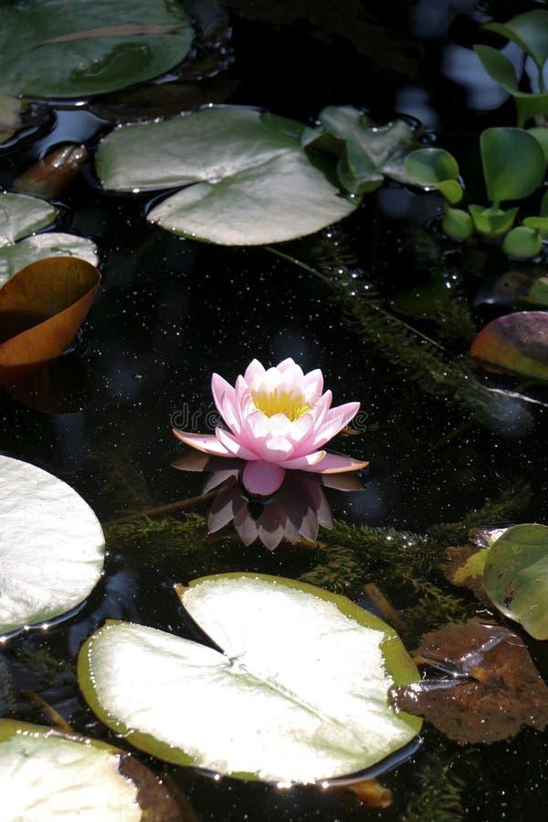 Flores bonitas na natureza fotos de stock royalty free