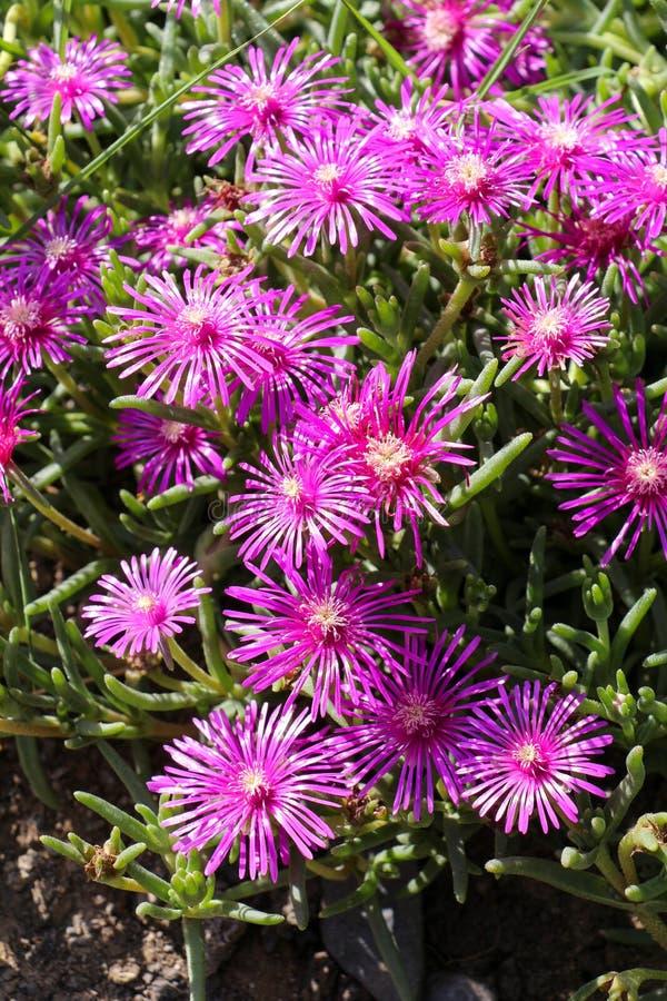 Flores bonitas na natureza imagem de stock