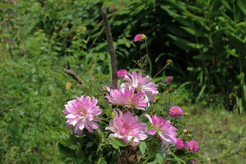 Flores bonitas na natureza foto de stock