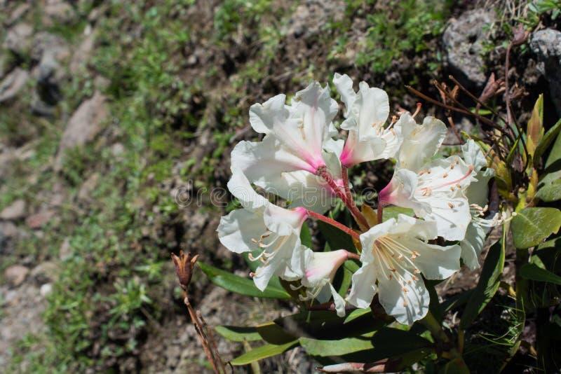 Download Flores bonitas na natureza foto de stock. Imagem de bouquet - 80100642