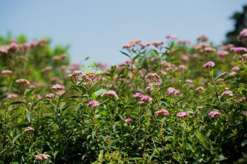 Download Flores bonitas na natureza imagem de stock. Imagem de fundo - 80100889
