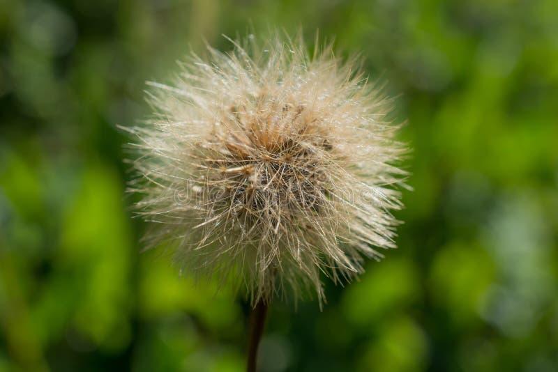 Download Flores bonitas na natureza foto de stock. Imagem de florescer - 80101162
