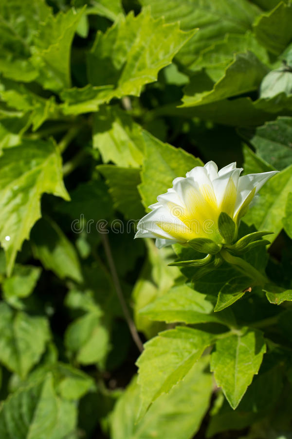 Download Flores bonitas na natureza foto de stock. Imagem de disambiguation - 80101462