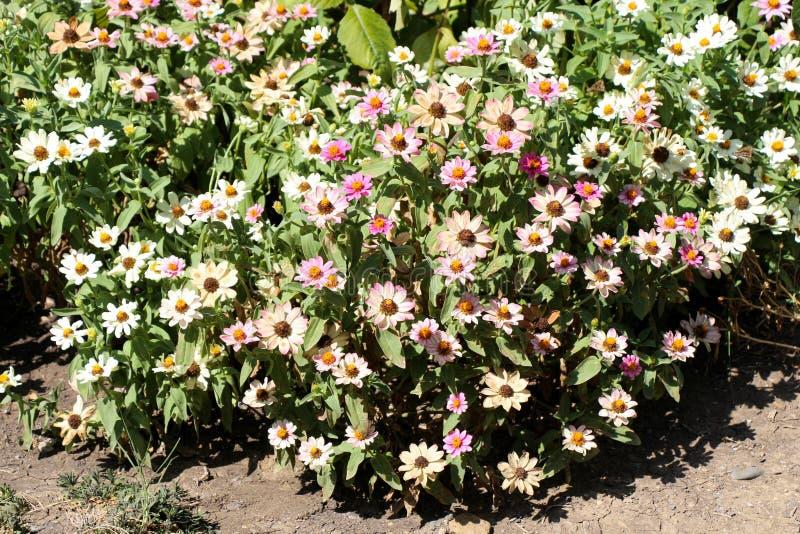 Download Flores bonitas na natureza foto de stock. Imagem de flores - 80102972
