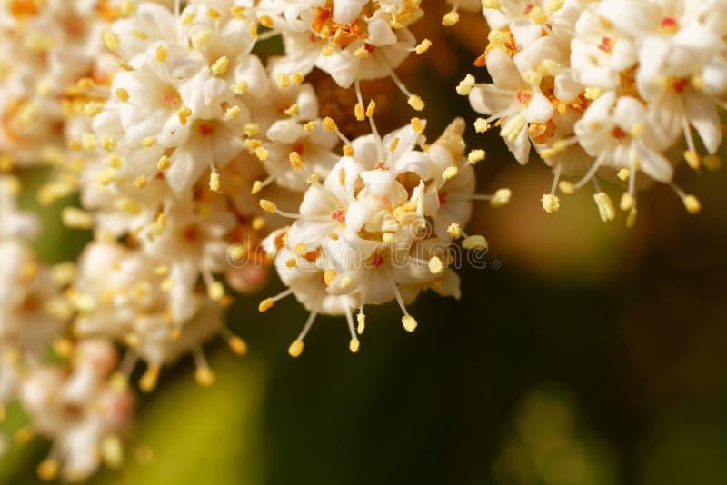 Flores bonitas no branco fotografia imagens de stock royalty free