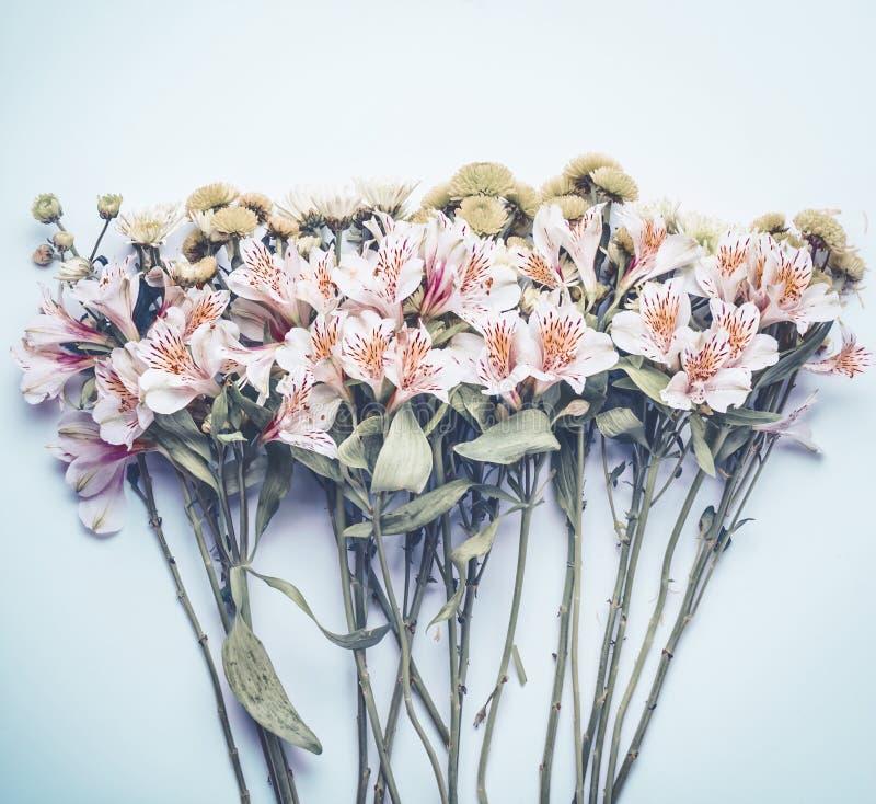 Flores bonitas no fundo azul pastel, vista superior Disposição floral fotos de stock