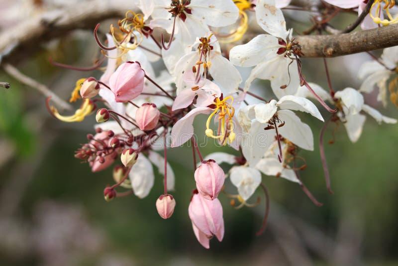 Flores bonitas no jardim fotos de stock