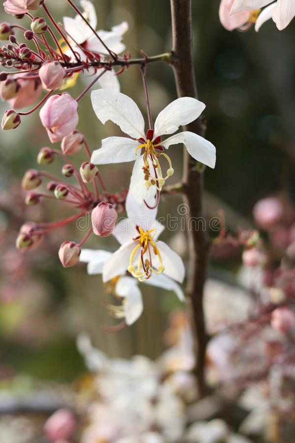 Flores bonitas no jardim imagens de stock