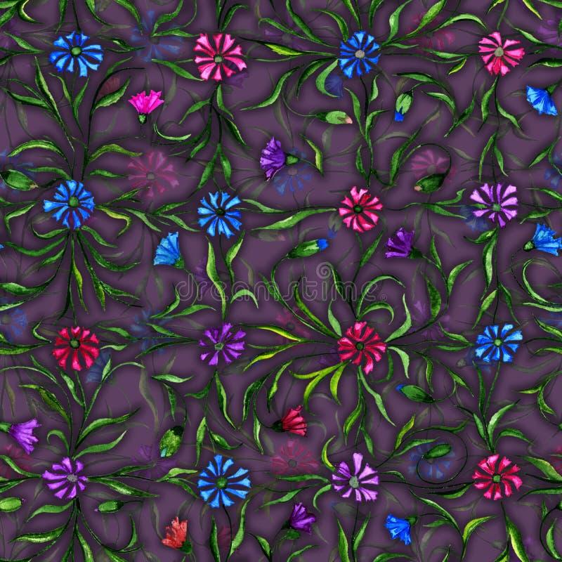 Flores bonitas pequenas com as folhas no fundo roxo escuro Centáureas brilhantes no teste padrão da verificação Teste padrão sem  ilustração royalty free