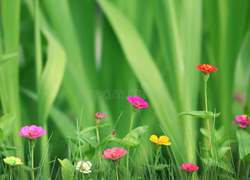 Flores bonitas pequenas no jardim fotografia de stock