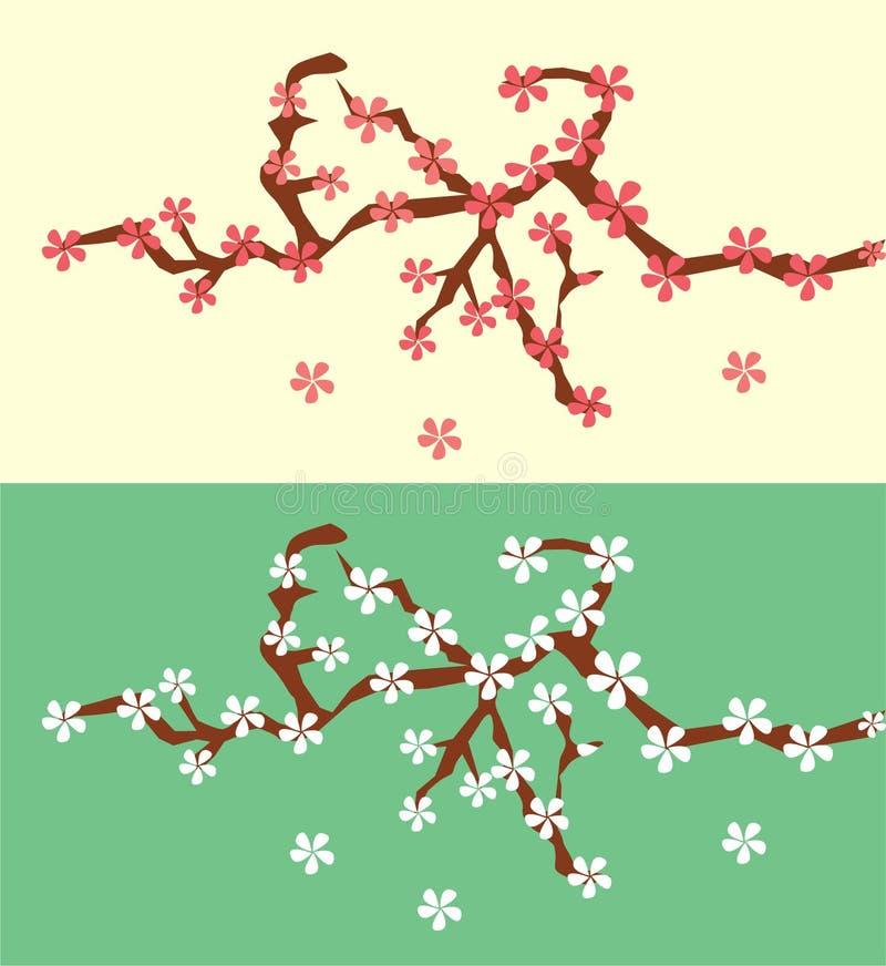 Flores bonitos e agradáveis da flor de cerejeira na árvore ilustração do vetor