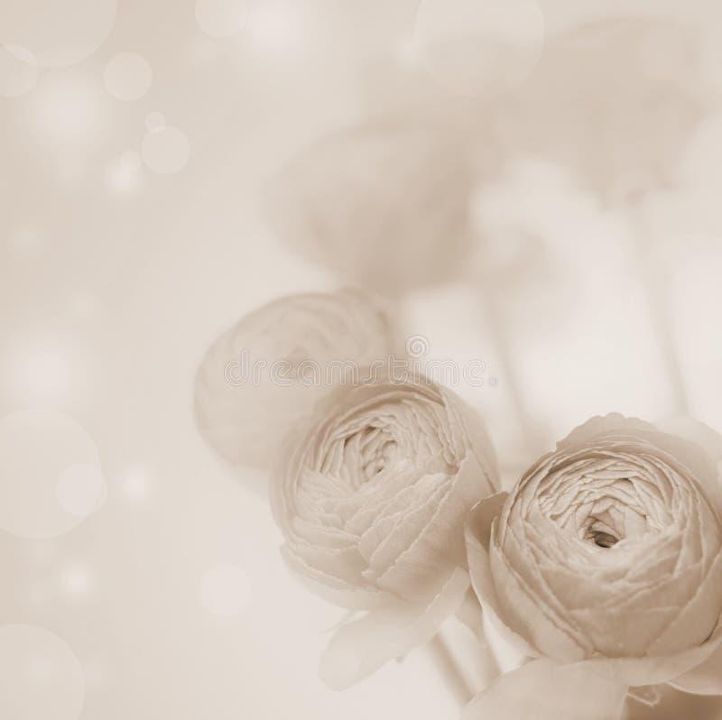 Flores borrosas flores hermosas de la sepia foto de archivo
