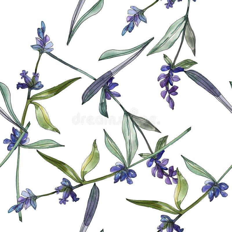 Flores botânicas florais da alfazema violeta Grupo da ilustra??o do fundo da aquarela Teste padr?o sem emenda do fundo ilustração royalty free