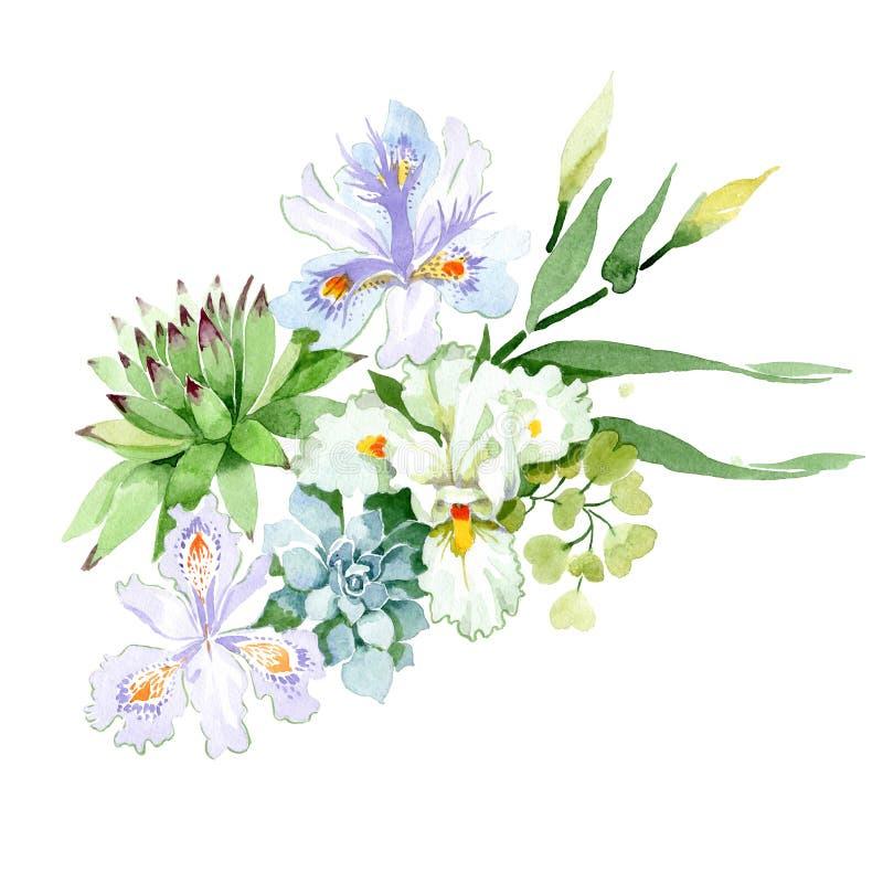 Flores botânicas florais do roxo e a branca da íris Jogo do fundo da aguarela Elemento isolado da ilustração do ramalhete ilustração do vetor