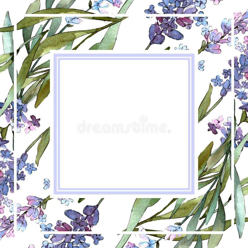 Flores bot?nicas florais da alfazema violeta azul Grupo da ilustra??o do fundo da aquarela Quadrado do ornamento da beira do quad ilustração royalty free