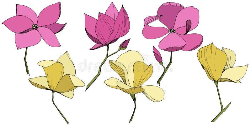 Flores bot?nicas foral de la magnolia del vector P?rpura y arte grabado amarillo de la tinta Elemento aislado del ejemplo de la m stock de ilustración