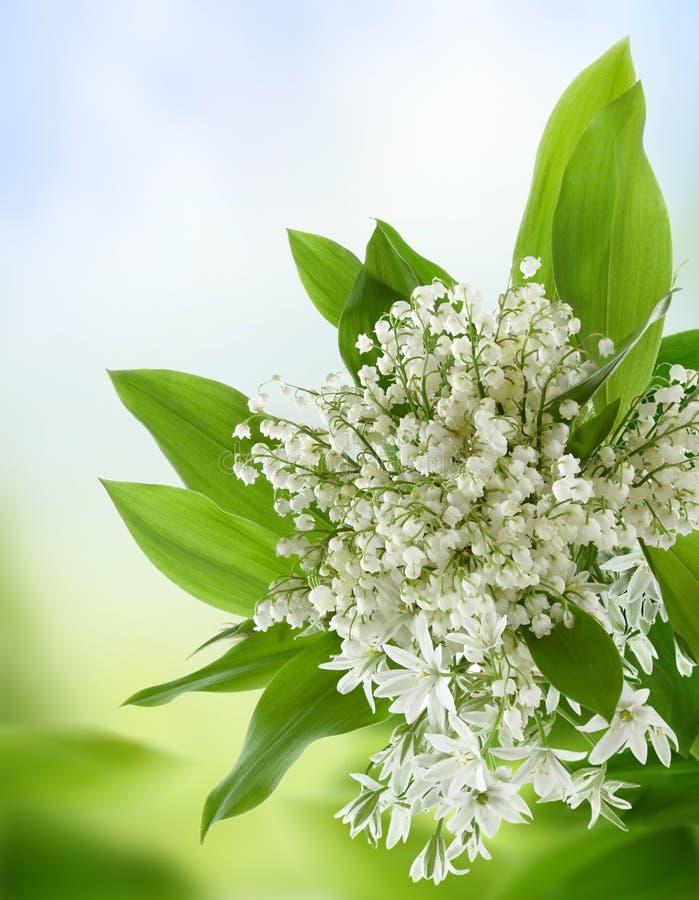 Flores brancas. imagens de stock royalty free