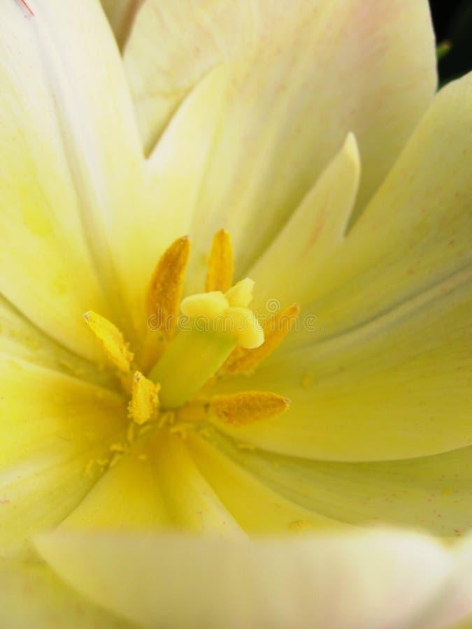 Flores brancas & cor-de-rosa imagens de stock