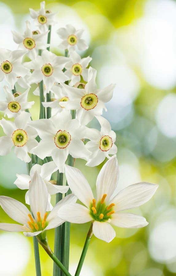 Flores brancas bonitas em um fundo verde imagens de stock