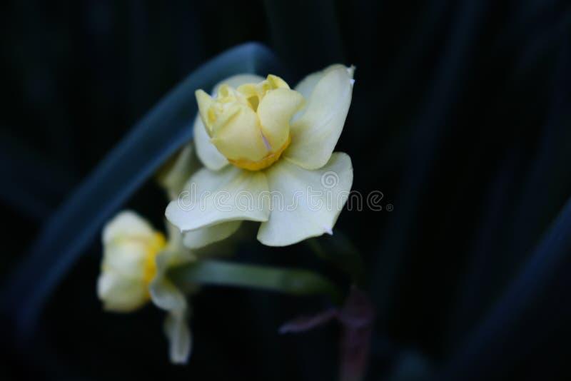 Flores brancas com ramo verde fotografia de stock