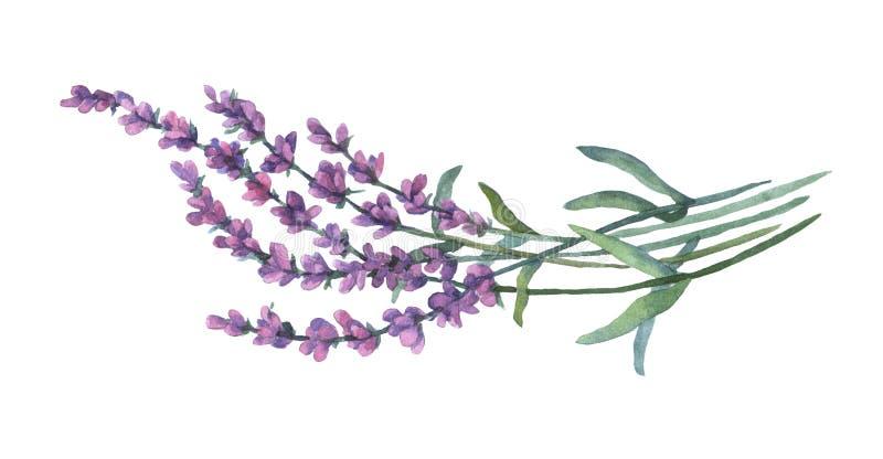 Flores brancas da alfazema vistas perto acima ilustração stock