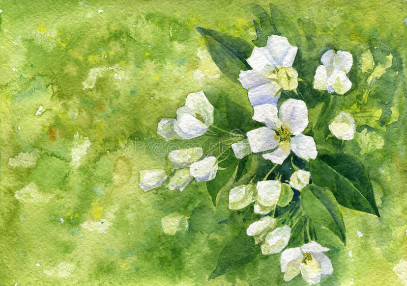 Flores brancas da maçã da aquarela ilustração royalty free