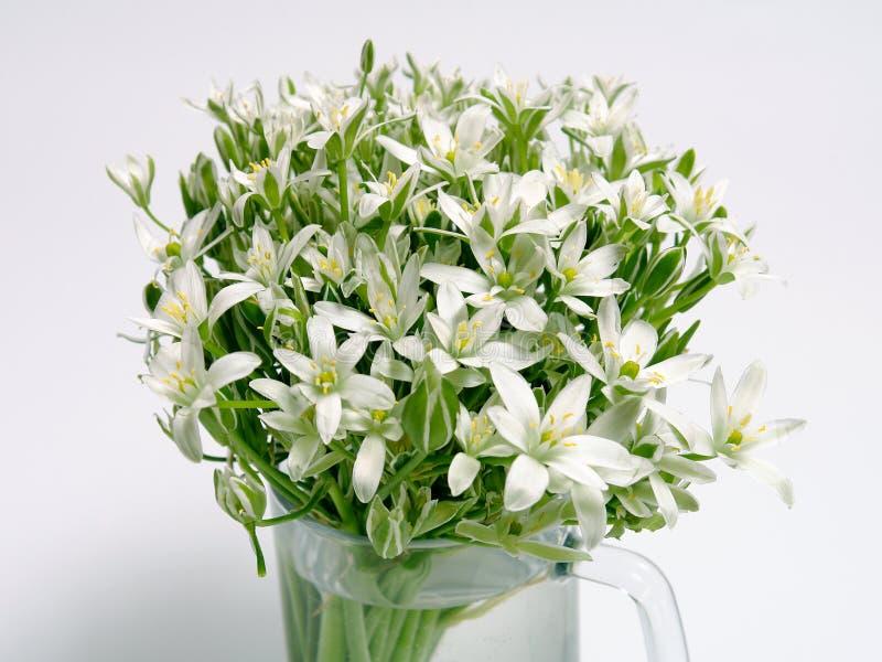 Flores brancas da mola foto de stock royalty free