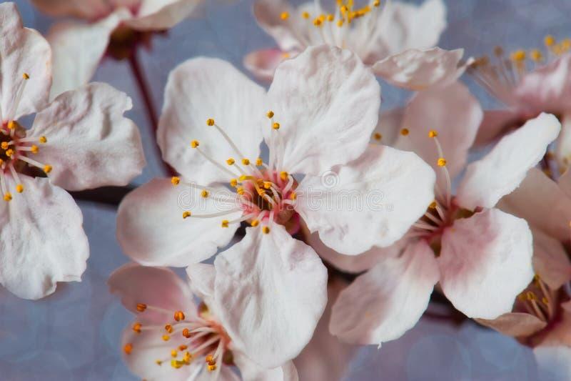 Download Flores imagem de stock. Imagem de março, beleza, sumário - 29846333
