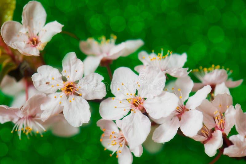 Download Flores foto de stock. Imagem de folha, filial, arte, fresco - 29847086