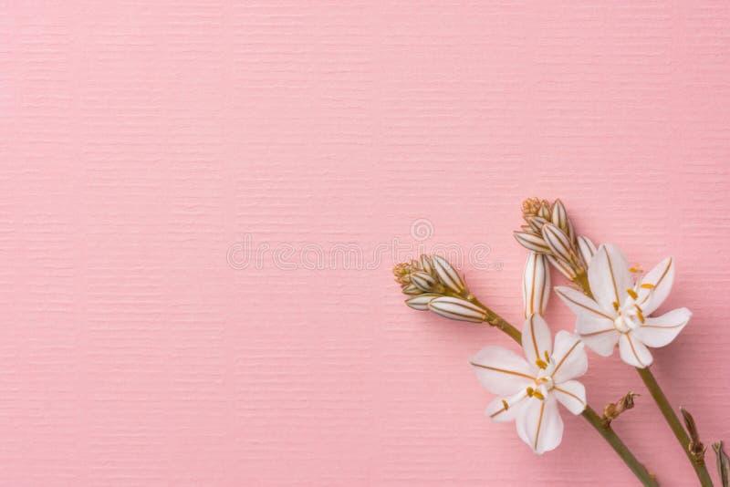 Flores brancas delicadas bonitas da mola na luz de linho da textura - fundo cor-de-rosa Casamento do aniversário do dia de mãe da foto de stock