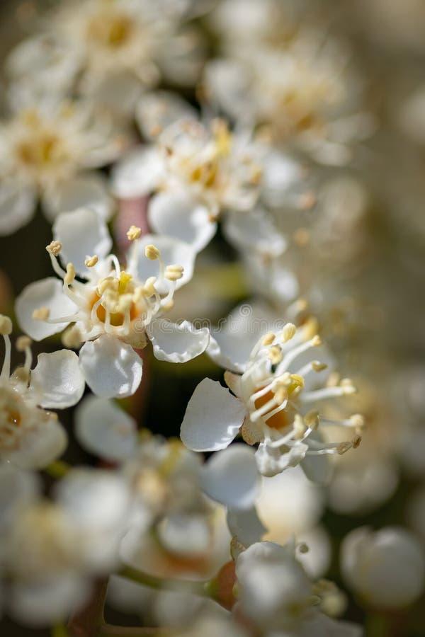 Flores brancas delicadas com profundidade de campo rasa fotografia de stock