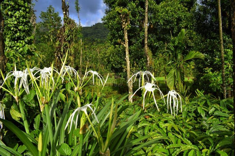 Flores brancas dentro da floresta fotos de stock royalty free