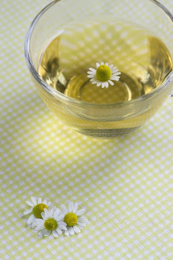 Flores brancas do chamomilla do Matricaria com centro amarelo, copo trasparent do chá na toalha de mesa, fitoterapia de florescên fotografia de stock royalty free