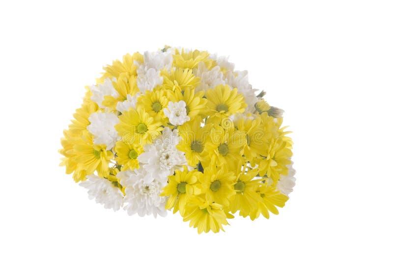 Flores brancas e amarelas no branco imagens de stock