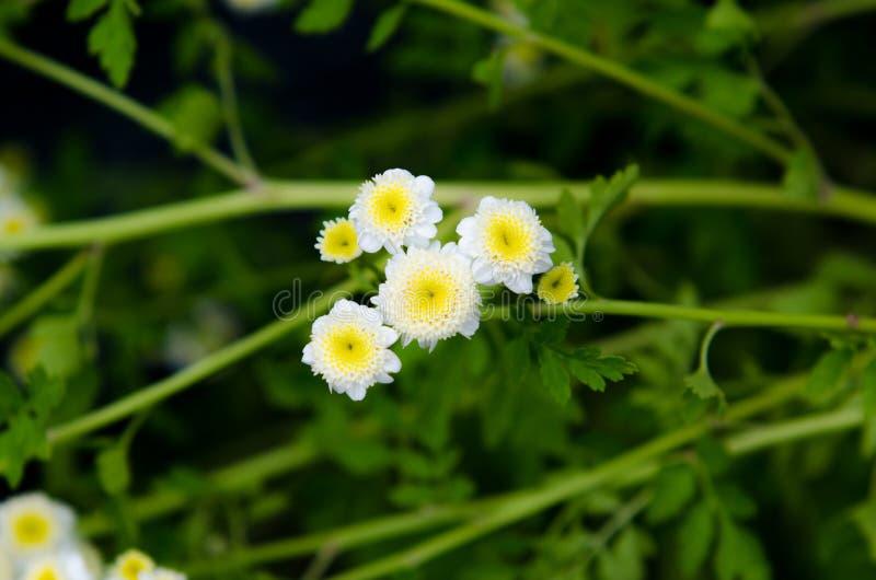 Flores brancas e amarelas pequenas nas madeiras foto de stock royalty free