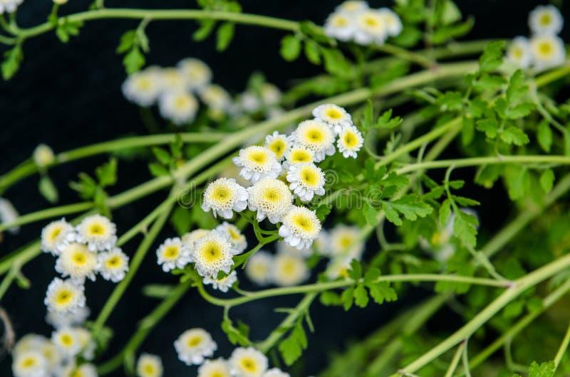 Flores brancas e amarelas pequenas nas madeiras fotos de stock