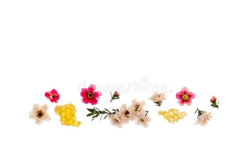 Flores brancas e cor-de-rosa do manuka com mel orgânico do manuka no fundo branco com espaço da cópia acima imagens de stock royalty free