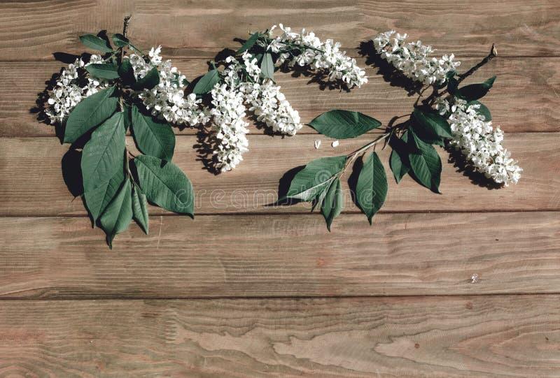 Flores brancas e folhas sobre fundo de madeira imagem de stock