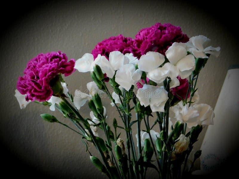 Flores brancas e roxas bonitas fotografia de stock royalty free