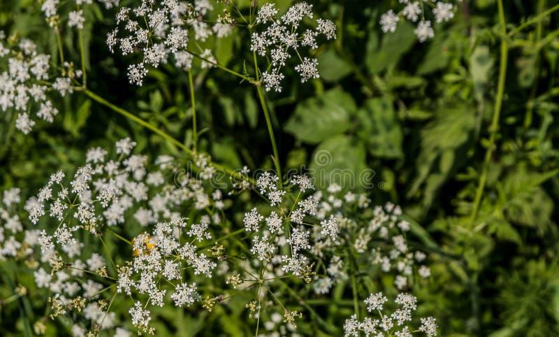 Flores brancas em uma conversão fotos de stock