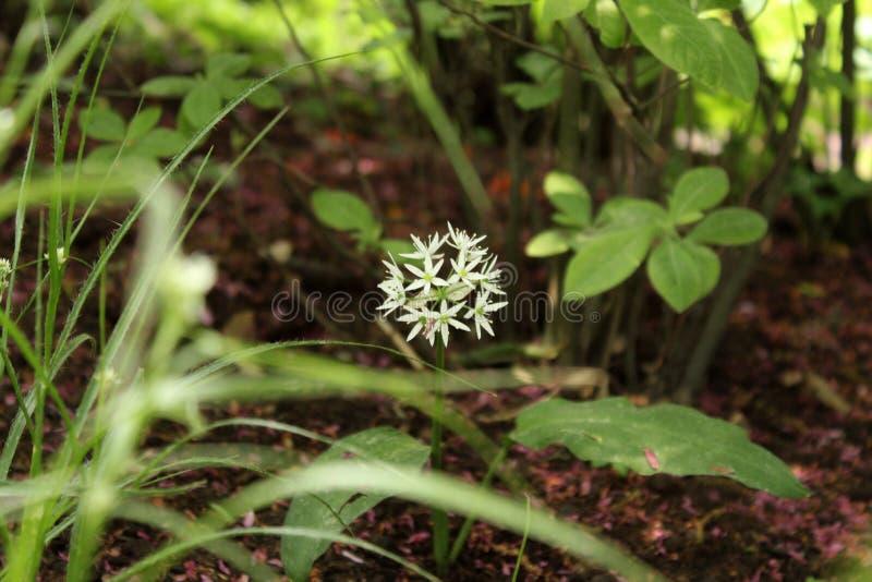 Flores brancas incomuns que escondem na grama verde fotos de stock royalty free
