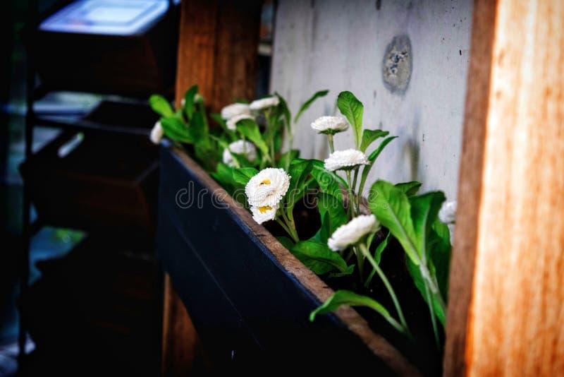 Flores brancas na caixa da flor foto de stock royalty free
