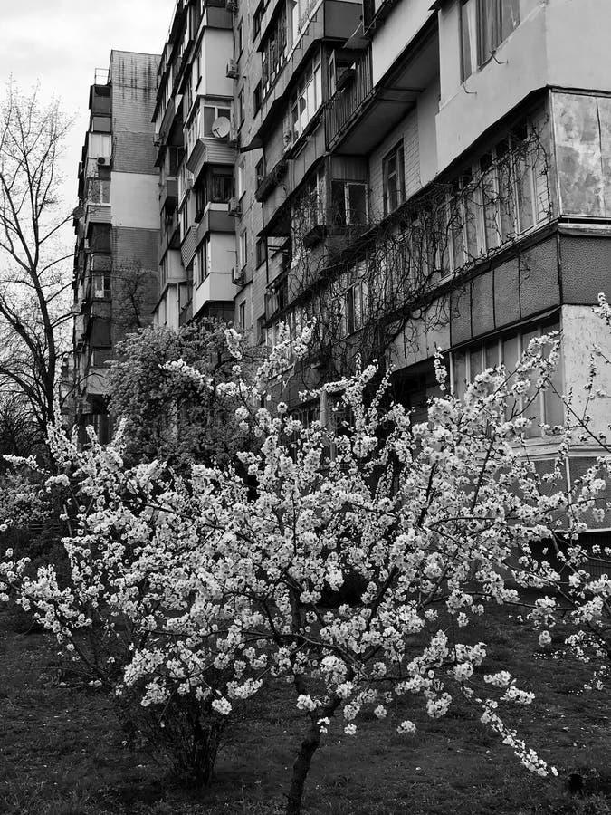 Flores brancas na frente de um bloco soviético em Ucrânia foto de stock