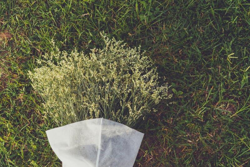 Flores brancas no campo de grama imagens de stock royalty free