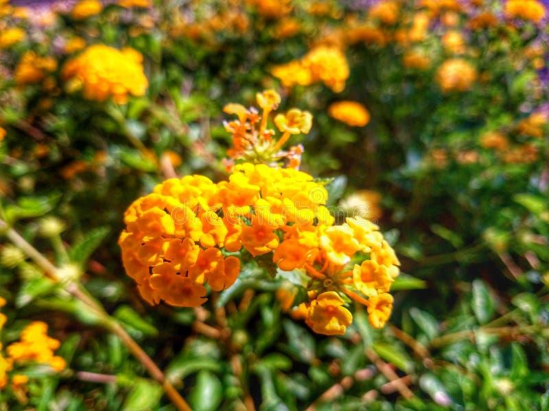 Flores brilhantes foto de stock