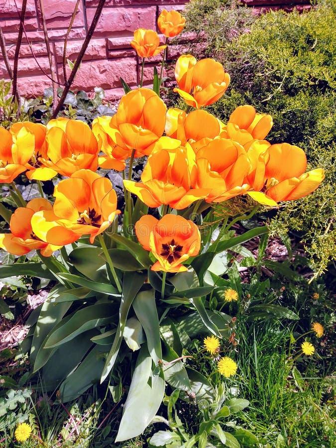 Flores brilhantes do verão foto de stock