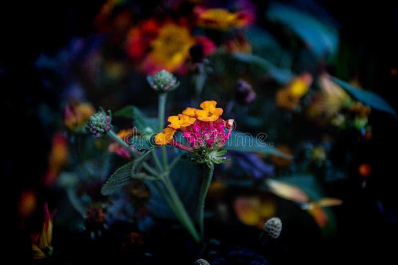 Flores brillantemente coloreadas foto de archivo